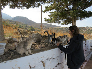 Chats Cyclades