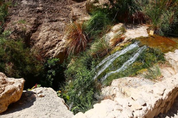 Eing Gedi parc désert de Judée