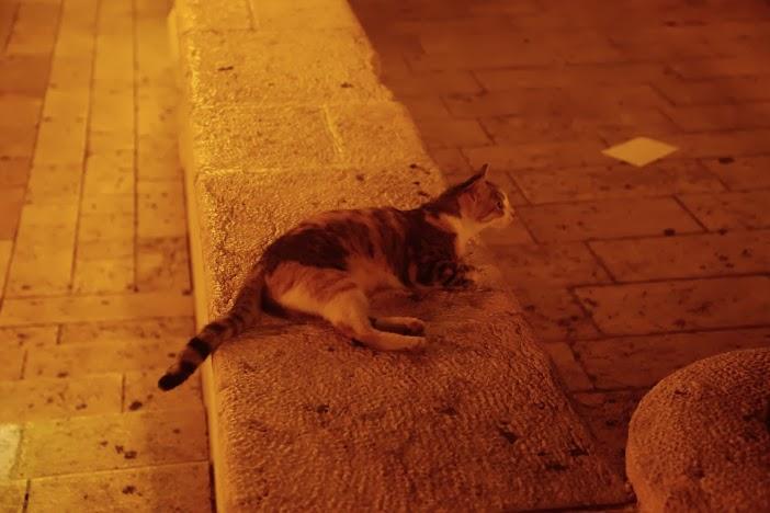 Tel Aviv chats