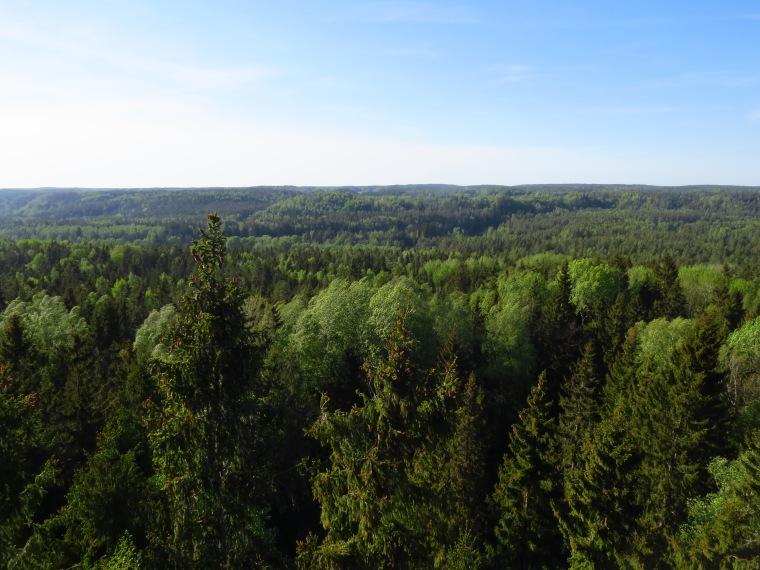 Parc de la Gauja Point de vue Lettonie