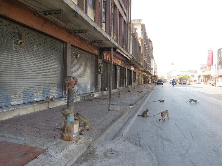 Lopburi ville des singes