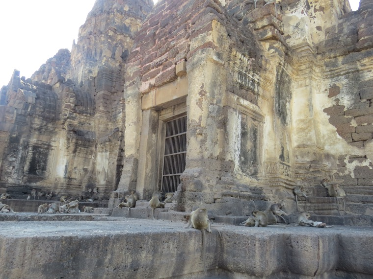Singes Lopburi temple