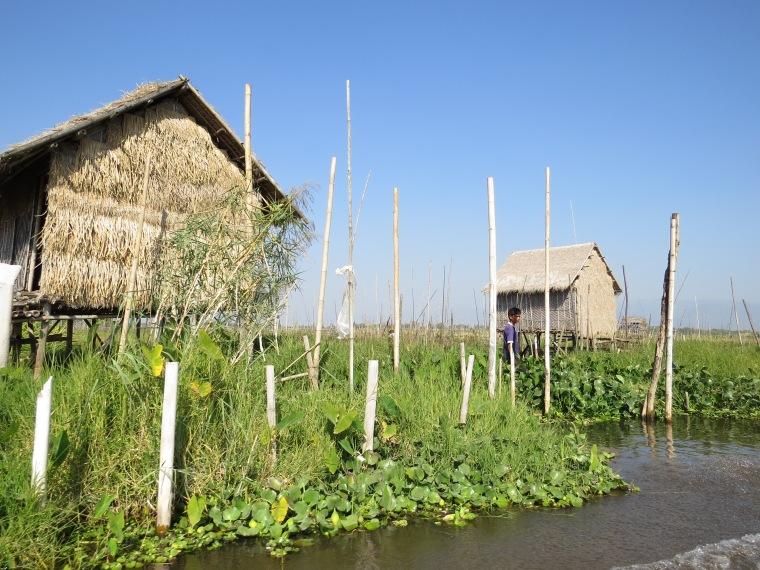 Jardins flottants sur Lac Inlé