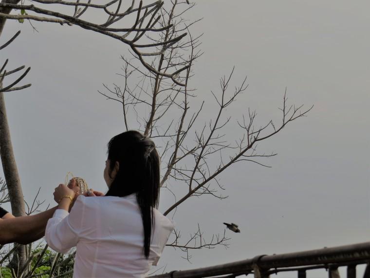 lacher oiseau Mont Phosi luang prabang