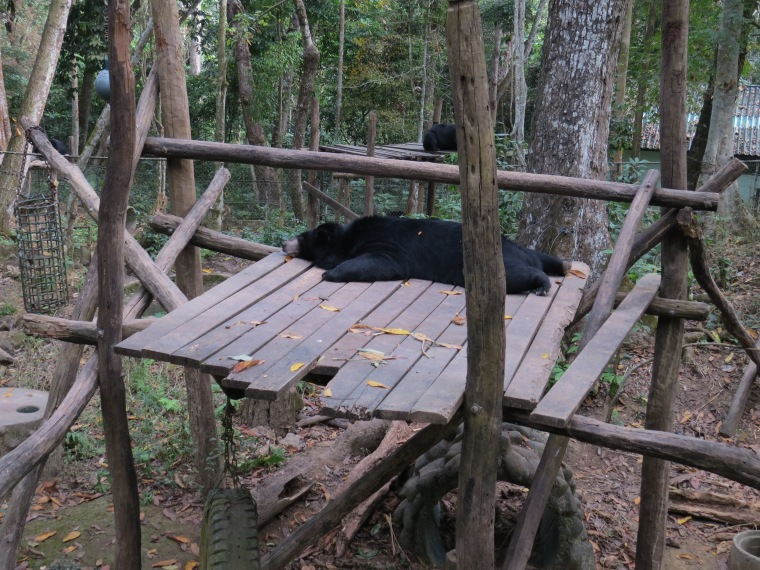 Tat Kuang Si Waterfalls Rescue bears