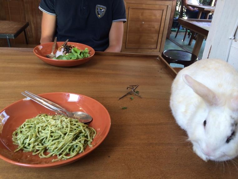 Rabbit Café Pai