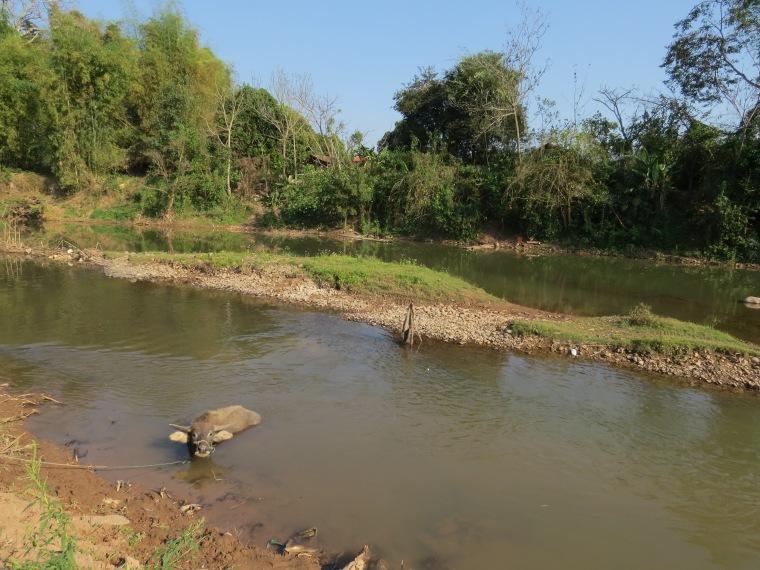 rivière lunag namtha baignade