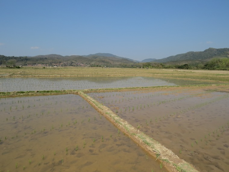 rizières lunag namtha laos