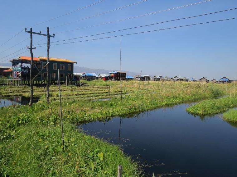 Jardin flottant Lac Inlé