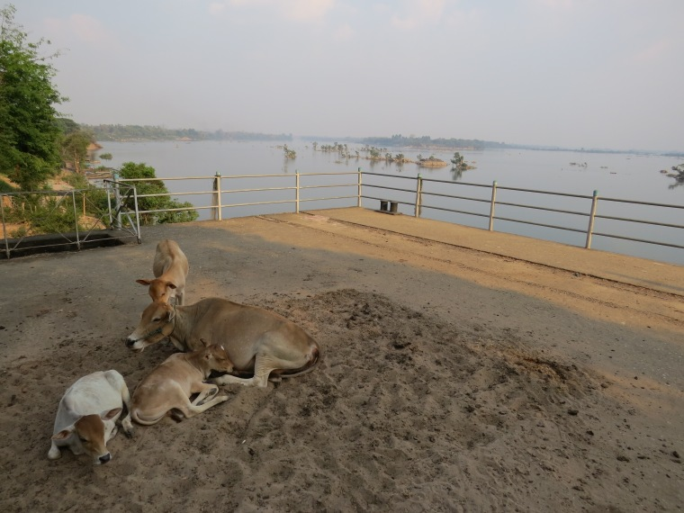 Voir Dauphins 4000 îles Laos