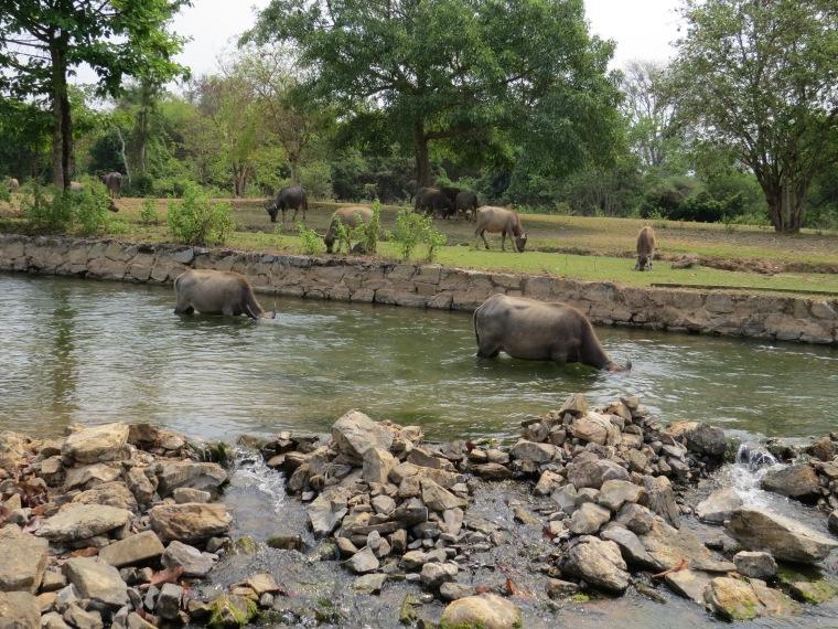 Cascades 4000 îles Laos