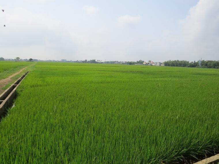 Hoi AN route de Haibatrang