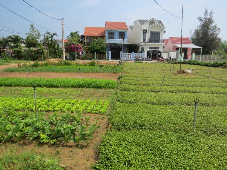 Traqué jardin écologique Vietnam