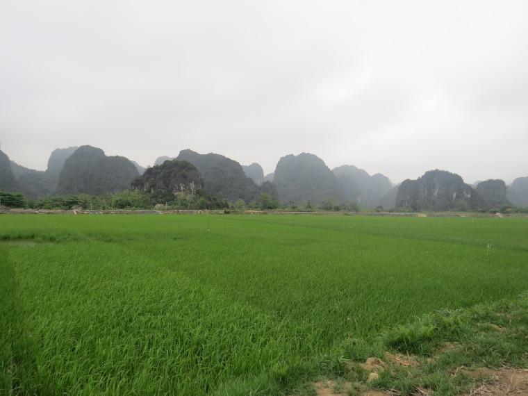Paysage Tam coc rizières