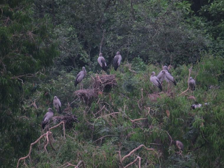 Bird Valley Tam Coc baie halong terrestre