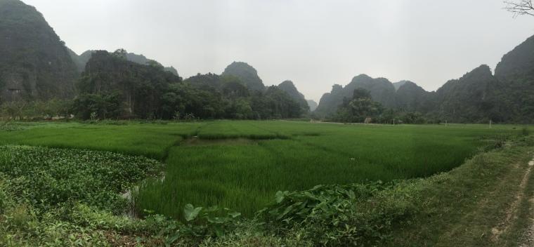 Rizière Vietnam Tam coc
