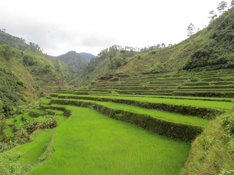 Rizière Banaue Philippines