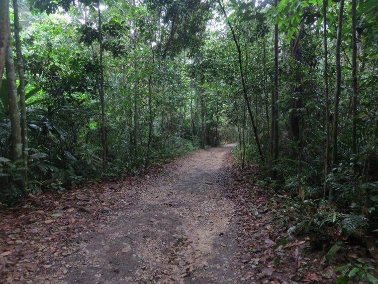 Randonnée jungle Singapour