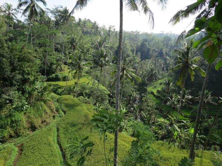 Gunung Kawi Ubud