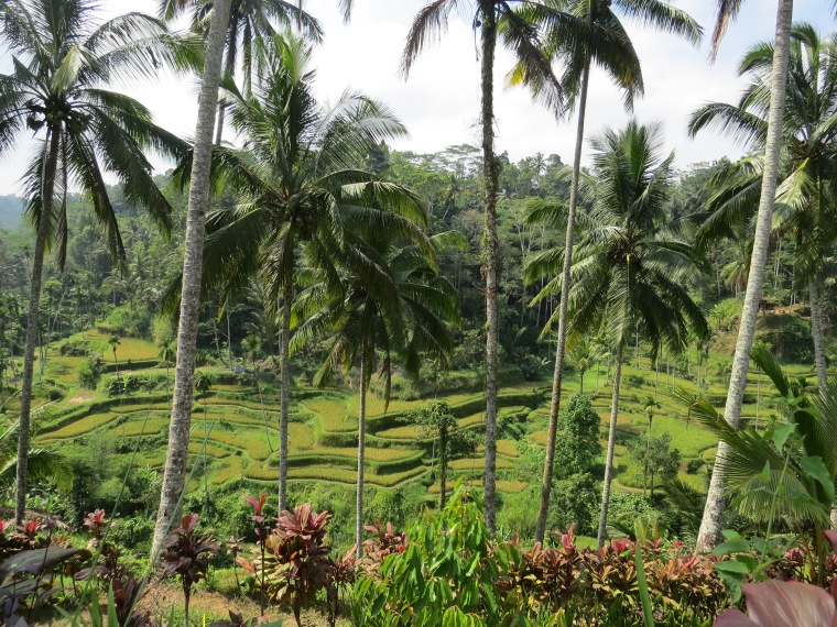 rizières de Tegallalang Bali