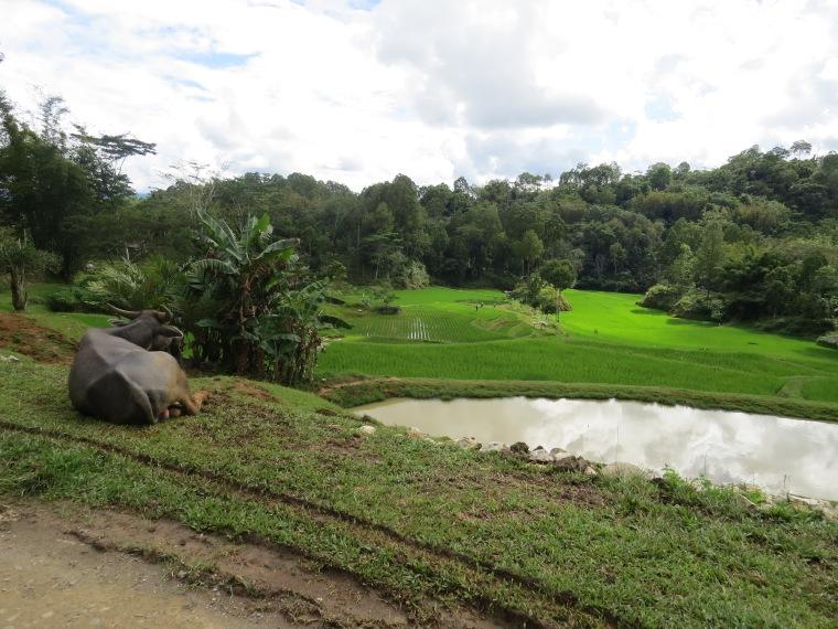 Rantepao landscape