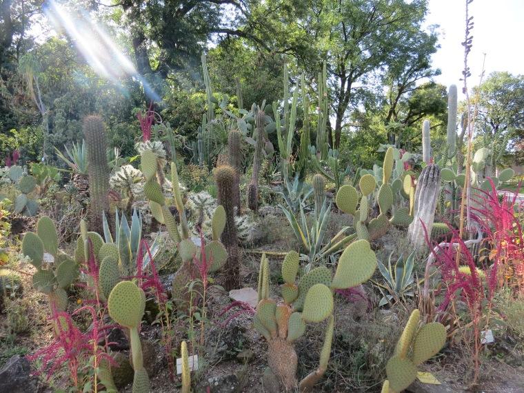 Jardin botanique Vienne gratuit